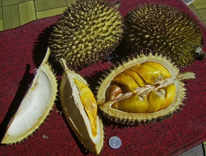top-5-bizarre-travel-foods